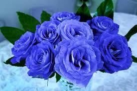 必ず叶う待ち受け の検索結果 Yahoo 検索 画像 レインボーローズ 待ち受け 緑色のバラ
