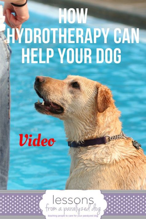 Hydrotherapy Can Help Your Dog Disabled Dog Dog Arthritis Therapy Dogs