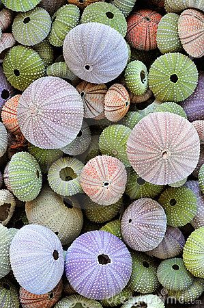 sea urchin shells, always loved green and pale lavender, but put some coral and the lightest blue in with it and I think you've got a color scheme.  Thank you nature.