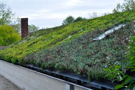 Yew Dell Botanical Garden Visit, Thinking Outside the Boxwood, Geenhouse Greenroof