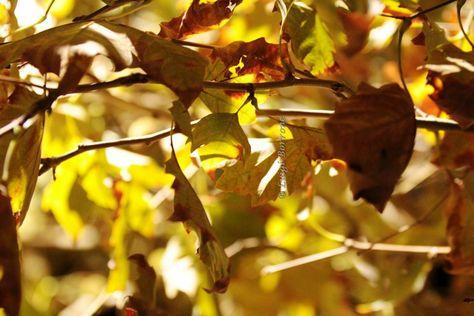 foglie Come un sentiero d'autunno:...