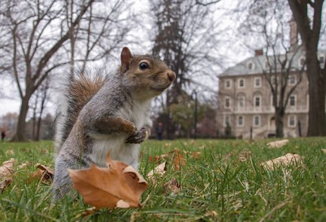 0d02cf683a0e8b22dc7fc6e748ac51eb  penn squirrel - How To Get Rid Of Squirrels In My Ceiling