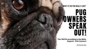 Pug Owners Speak Out-The REAL Pug Dog Breed! #pugs #puggies #pug #ilovepugs #pugeyes #coolpugs #puggy