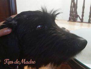 Profilaxis Canina Limpieza De Dientes Y Mal Olor Limpieza