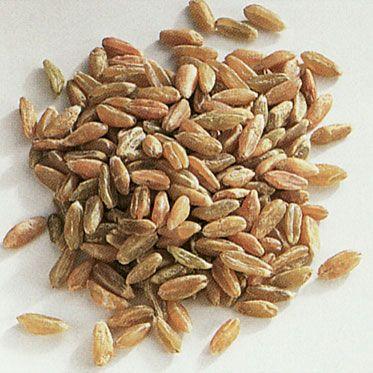 L'origine del #Grunkern ( #farro o #spelta verde essiccata) va ricercata nell'antica tradizione contadina dei terreni aridi del Bauland, nella Franconia bavarese. Tradizionalmente era ingrediente di #minestre o #polpette (Bratling), ma di recente, è entrato anche in diverse altre #ricette della #tradizione #tedesca, come le Klössen (polpette di patate, pane e cereali), le Eintöpfe (minestre di carne e verdure), #insalate, #stufati, #risotti, #torte e #biscotti.