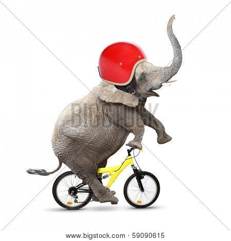 Funny Elephant With Protective Helmet Riding A Bike Safety And