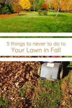 Don T Neglect These Fall Lawn Care Practices Essential To A