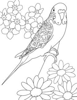 Parakeet Coloring Pages With Images Bird Coloring Pages Bird