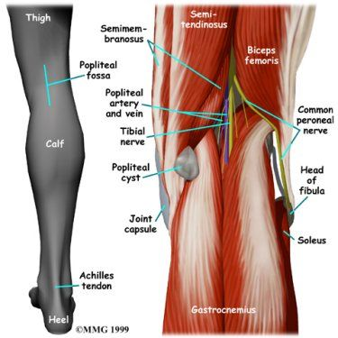 pain behind the knee / in back of knee