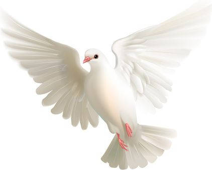 White Pigeon Realistic Pigeon White Pigeon Dove Pictures