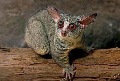 Big Eyed Animal Big Eyed Animals Cute Small Animals Animals