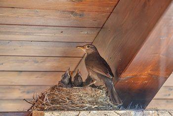 How To Keep Birds From Nesting On Porches Bird Deterrents Bird Repellents Keep Birds Away