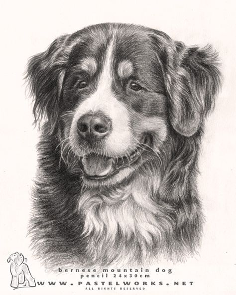 0d a2b9dd02fe32b4ea92bd518b4 drawings of dogs bernese mountain dogs