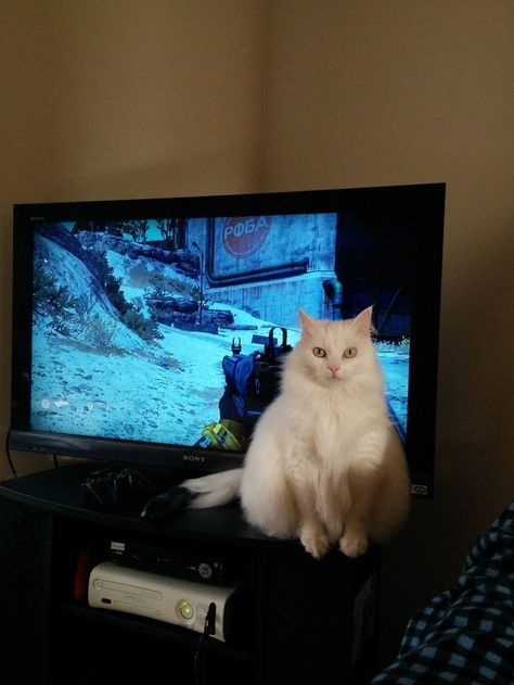 16 Extremely Helpful Cats Who Never Get in the Way of Anything
