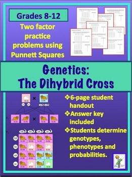 Amoeba Sisters Dihybrid Crosses Worksheet Answer Key ...