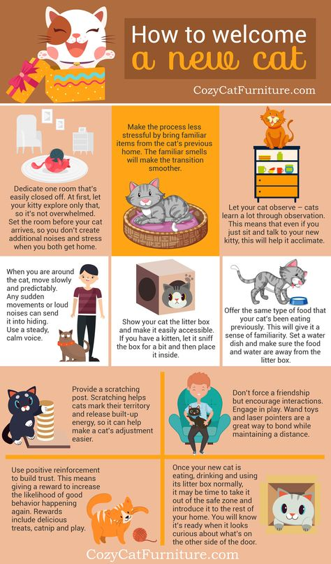New Cat In Home How To Introduce New Kitty And Help It Adapt Cat Advice Cats Cat Mom