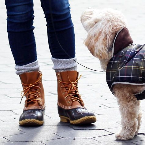It's a Barbour and Bean Boot kinda day 🐶☃️ @barbour @barbourdogs @llbean @llbeanpr #llbean #llbeanpets