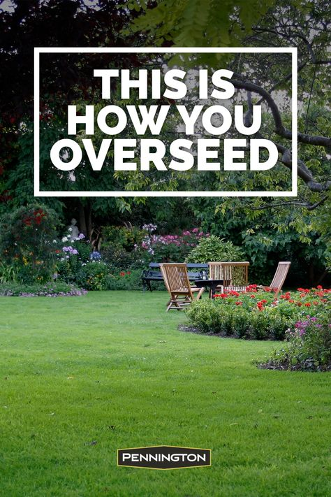 Use this complete guide to overseed your lawn this spring. Use this complete guide to overseed your lawn this spring. Outdoor Landscaping, Front Yard Landscaping, Outdoor Gardens, Formal Gardens, Landscaping Design, Backyard Patio, Outdoor Decor, Outdoor Spaces, Gardens