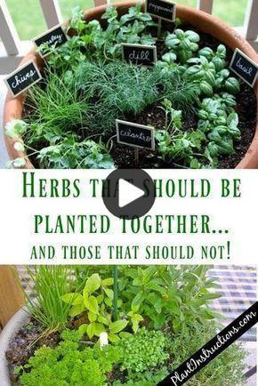 Les Herbes Qui Grandissent Ensemble Dans Un Pot In 2020 Veggie Garden Herbs Vegetable Garden Design