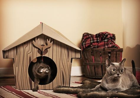 15 Creative Cat Houses And Cool Cat Bed Designs Home With Cat