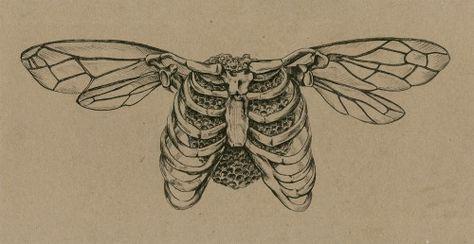 Sara Suppan Untitled, Pen and Ink, Tumblr Tattoo, Kritzelei Tattoo, Piercing Tattoo, Tattoo Drawings, Art Drawings, Knee Tattoo, Moth Tattoo, Sternum Tattoo, Pretty Tattoos