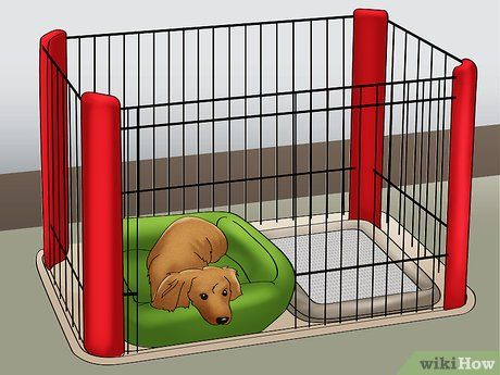 Potty Train Your Puppy Using A Bell Training Your Puppy