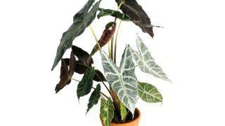 12 Plantas De Interior De Hoja Grande Plantas De Interior