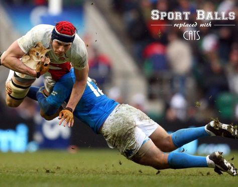 Rugby is basically a group video game in which your major objective is to rack up more points in contrast to the other team. In each team of rugby there are 15 gamers on the area
