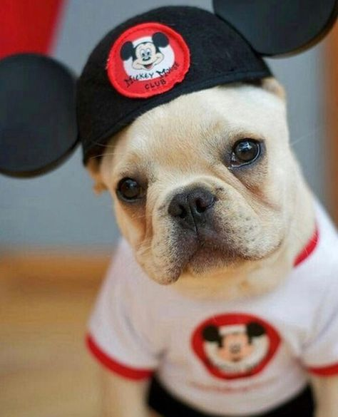 The cutest little mouseketeer 🐭🐾