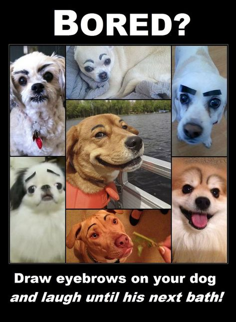 When Garage Sale Hosts Have Too Much Time On Their Hands Funny Animal Pictures Cute Dog Photos Beautiful Dogs