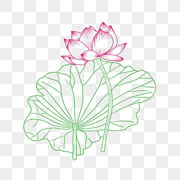 Lotus Vector Material Lotus Clipart Lotus Linear Png Transparent Clipart Image And Psd File For Free Download Lotus Vector Butterflies Vector Lotus Flower Logo
