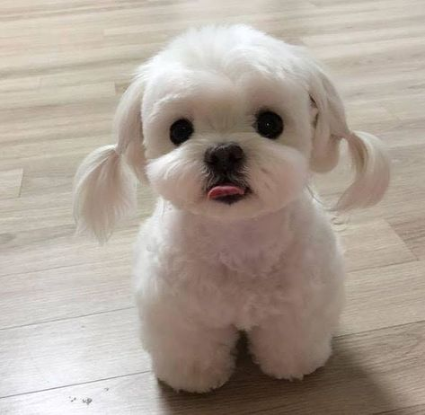 15 Photos of Dog Grooming That Are So Cute They'll Make You Wish You Had a Dog