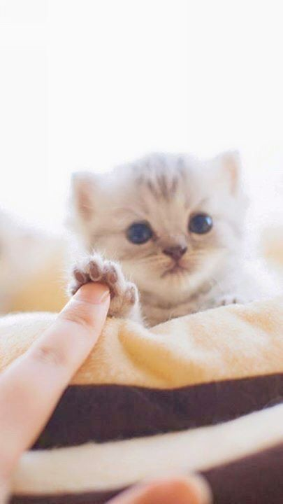 Cute Cats For Whatsapp Dp Cute Kittens Eating Ice Cream Cute