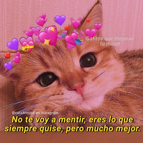 #gatitos #memesdegatitos #michis #parejas #novios #escritosdenovios #cosasdenovios #parejasgoals #frasesdenovios #pareja #amorinfinito #amor❤️ #amordemivida #amordemais #amorverdadeiro #amorgatuno #amoranimal #amormio #frasesamor #amordelbueno #teamotanto #teamooo #teamo😍 #teamoo #teamo❤️ #frasesdeamor❤️ #frases