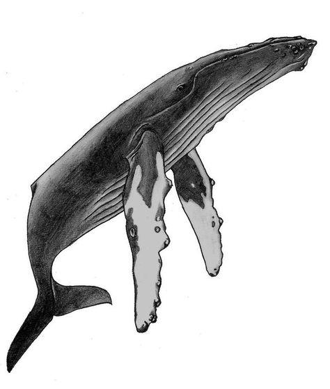 И нашли окаменелость интересного кита