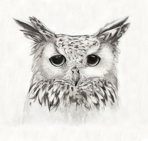 burrowing owl sm art sketches pinterest owl drawings and charcoal drawings