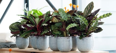 Souche d/'arbre animal maison plante pot avec Cadeau Gratuit!