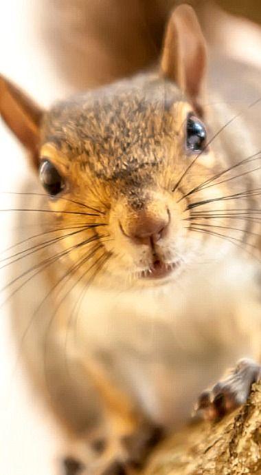Curious Squirrel Squirrel Squirrel Species Cute Little Animals