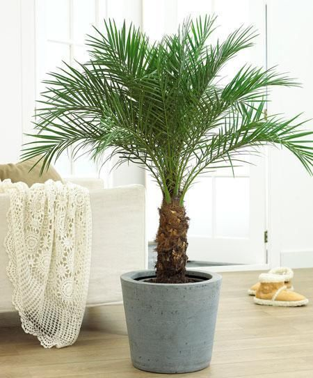 21 Air Purifying Plants For Removing Indoor Toxins The Daily