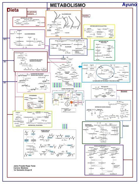 Se muestra un mapa de las interacciones existentes entre todos estos procesos bioquímicos: Tamaño original: Click Aquí