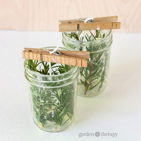 How to Make an Evergreen Herb Candle Step (4)