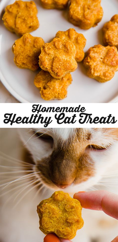 Healthy Homemade Pumpkin Cat Treats These homemade cat treats are the perfect treat for your kitty! They're made with salmon, pumpkin, oats, egg, and avocado oil. Healthy Cat Treats, Pet Treats, Cat Recipes, Dog Food Recipes, Homemade Cat Food, Homemade Recipe, Pumpkin Puree, Avocado Oil, Ragdoll Kittens