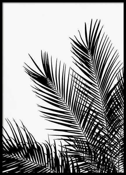 Affiche Noir Blanc Black White Pictures Commande En Ligne Desenio Affiche Black Blanc Commande Deseni Desenio Feuille Palmier Poster Noir Et Blanc