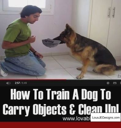 Training Dog To Stop Barking At Doorbell And Pics Of Tips For