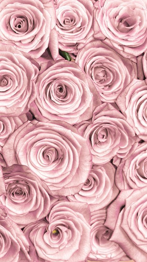 Beautiful Pink Flowers For Your Branding Aesthetic Rose Gold Wallpaper Iphone Gold Wallpaper Background Flower Background Iphone Fantastic flower wallpaper download