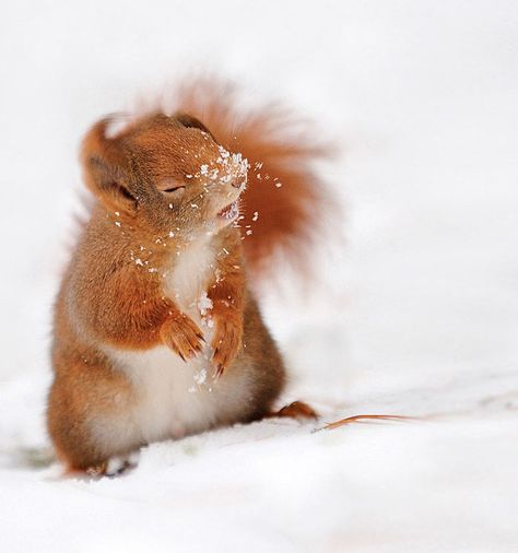 Voici une série d'adorables photos d'écureuils, de splendides images de ces facétieux mammifères.