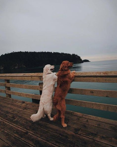 """flowartstation: """" The Story Of Inseparable Golden Retrievers: Watson and Kiko Watson • Kiko (@wat.ki) Meet Watson, Kiko, And Harry, Three Best Friends Taking Over Instagram With Their Adorable Pics What if I told you that this post is about three..."""