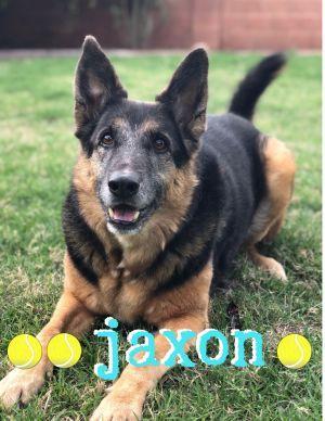 Adopt Jaxon 2 On Dog Adoption Love Pet Adoption