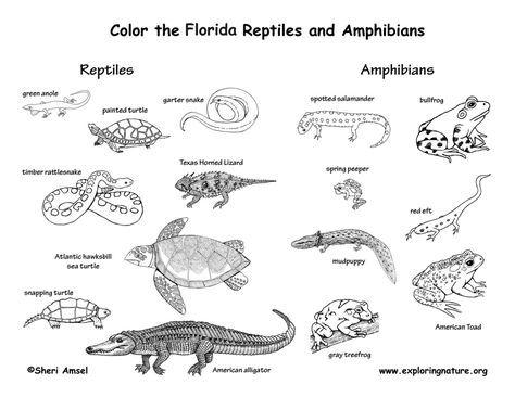 Florida Habitats Mammals Birds Amphibians Reptiles Amphibians Reptiles Mammals