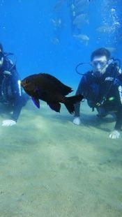 18 Marine Life In Lanzarote Ideas Marine Life Lanzarote Marine